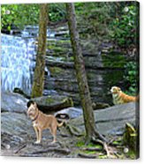 Long Creek Falls Acrylic Print by Bob Jackson