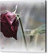 Red Rose Still Life Acrylic Print