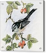 Long Tailed Tit And Rosehips Acrylic Print