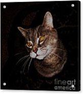 Long Whiskers Acrylic Print