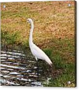 Long White Strides Acrylic Print