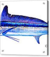 Longbill Spearfish Acrylic Print