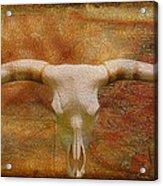 Longhorn Of Texas Acrylic Print by Jack Zulli