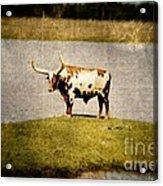 Longhorn Acrylic Print