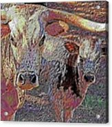 Longhorn Two Acrylic Print