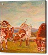 Longhorns On The Plateau Acrylic Print