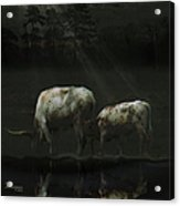 Longhorns Reflections At The Pond Acrylic Print