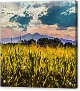 Longs Peak Harvest Acrylic Print by Rebecca Adams