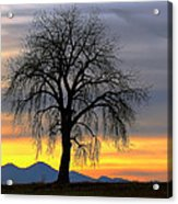 Longs Peak Sunset Acrylic Print by Rebecca Adams