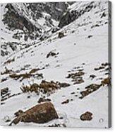 Longs Peak -  Vertical Acrylic Print by Aaron Spong