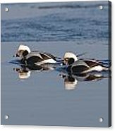Longtail Brothers Acrylic Print