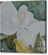 Longue Vue Magnolia 3 Acrylic Print by Katie Spicuzza