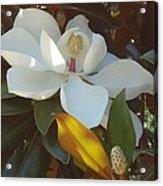 Longue Vue Magnolia Acrylic Print