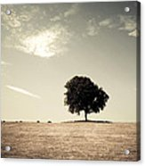 Lonsome Listry Acrylic Print