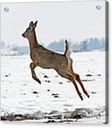 Look I Am Flying Acrylic Print