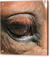Look Into My Eye Acrylic Print