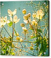 Look Up And You Will See Acrylic Print