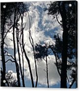 Look Up To Me Acrylic Print