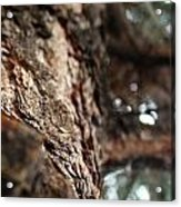 Looking At Bark Acrylic Print
