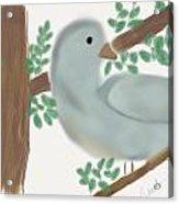 Looking Bird Acrylic Print