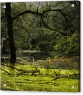 Looking For Food Merged Image Acrylic Print