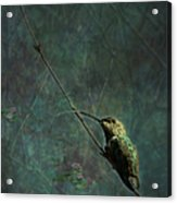 Looking For Monet 1 Acrylic Print