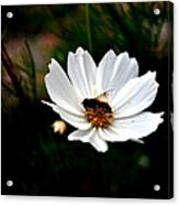 Looking For Nectar - Viator's Agonism Acrylic Print