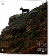 Looking Out To Sea Acrylic Print