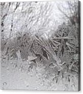 Looking Through The Frost Iv Acrylic Print