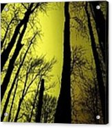 Looking Through The Naked Trees  Acrylic Print