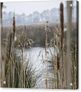 Looking Through The Reeds Acrylic Print