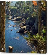 Looking Through The Trees At Point Lobos Acrylic Print