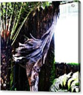 Looking Through The Window Of Extinction Acrylic Print