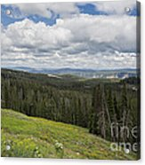 Looking To The Canyon - Yellowstone Acrylic Print