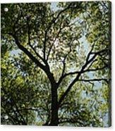 Looking Up Acrylic Print