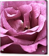 Looking Up - Dusty Rose Acrylic Print