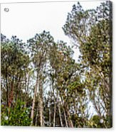 Looking Up For Once Acrylic Print