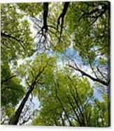Looking Up Acrylic Print