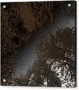 Looking Up Through Copper Forest Acrylic Print