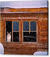 Looks Cold Out There Acrylic Print