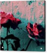 Looks Like Painted Roses Abstract Acrylic Print