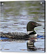 Loon And Reflection Acrylic Print