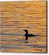 Loon At Sunset 6958 Acrylic Print