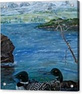 Loon Family And Morning Mist Acrylic Print