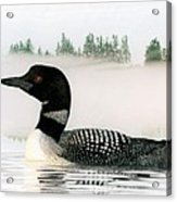 Loon In Fog Acrylic Print