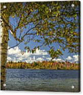 Loon Lake In Autumn With White Birch Tree Acrylic Print