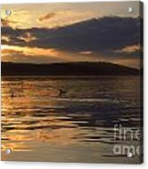 Loon Lake Acrylic Print