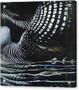 Loon Reflections Acrylic Print by Lynette Yencho