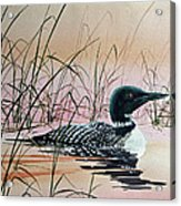 Loon Sunset Acrylic Print by James Williamson