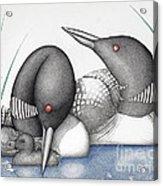 Loons Acrylic Print by Wayne Hardee